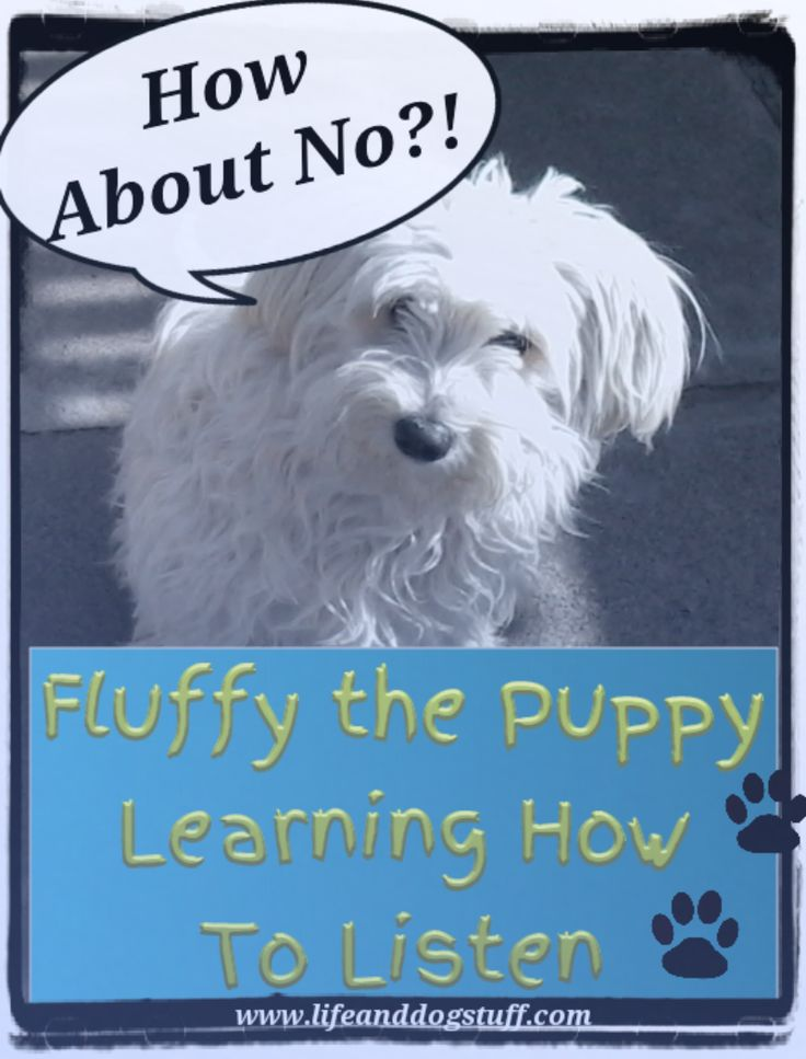 Check out blog post Fluffy the Puppy Learning How to Listen at Life and dog stuff blog.