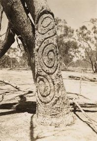 Kamilaroi tradition sees a ritual of circular rock formations on the ground used as part of the rite of passage ceremony. These circles are powerful symbols representing a totem or kinship. Trees surrounding the ceremonial site have often been carved to form part of the celebration.