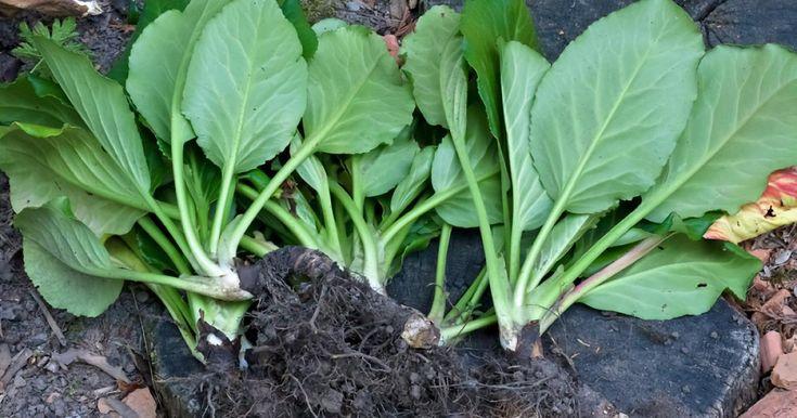 Dahlien pflanzen, Rasen und Blumenwiese aussäen, Tulpen roden, Flieder schneiden: Im Mai ist im Ziergarten viel zu tun. Hier finden Sie die wichtigsten Tipps.