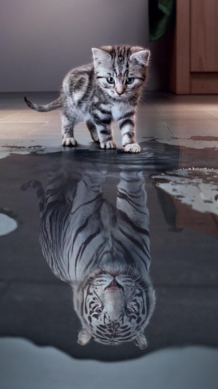 Download Kitten Wallpaper By Zomka 1c Free On Zedge Now