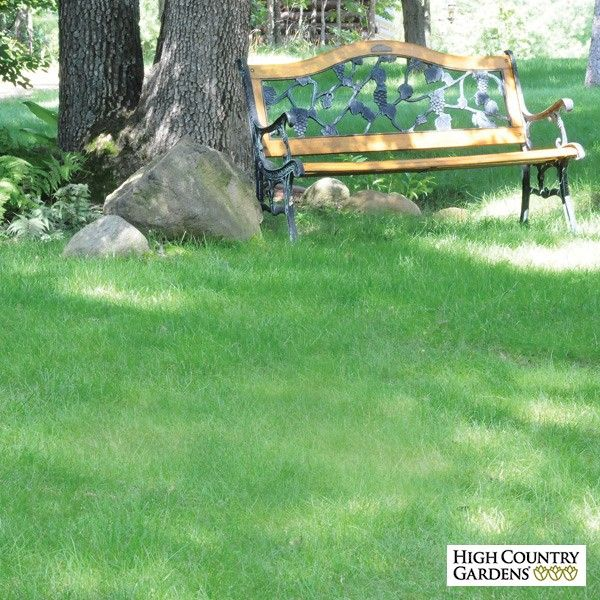No Mow Lawn Grass Seed