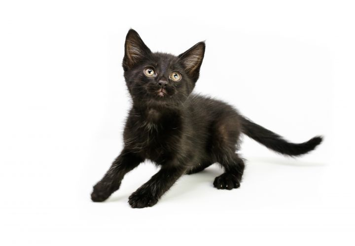 Adopt Ryker So Fun Loving And Playful On Petfinder Cat Adoption Pretty Cats Help Homeless Pets