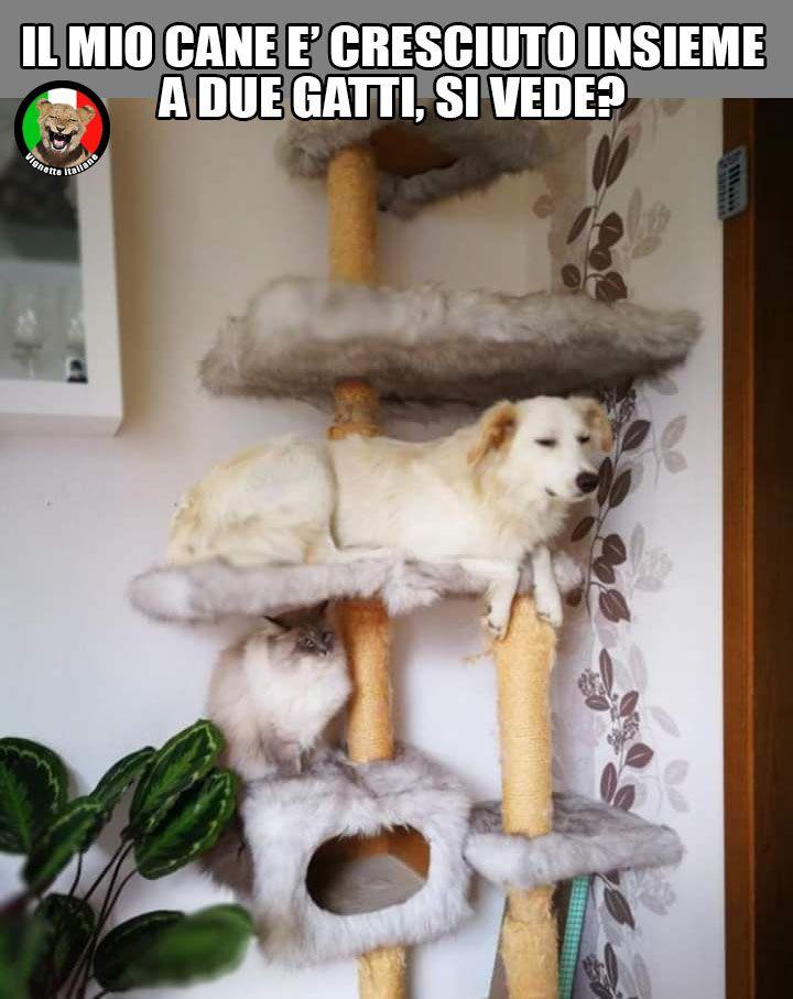 Un cane tra due gatti