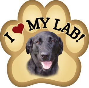 Black Labs :)Labrador Retriever, Black And Chocolates Labs, Friends, Dogs, Yellow Labs, Pets, Random Pin, Black Labs, Animal