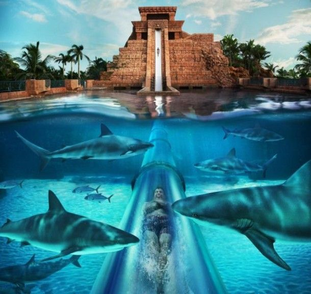 Scariest Water Slide of the world, Leap Of Faith Atlantis - Bahamas (1)