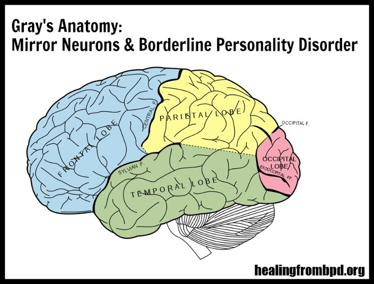Gray's Anatomy:  Mirror Neurons and Borderline Personality Disorder