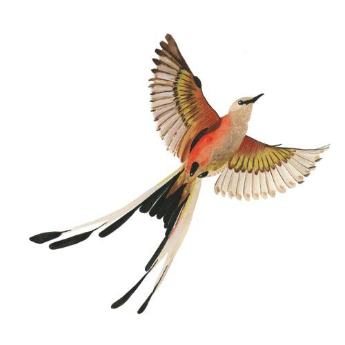 Scissor tailed flycatcher clipart - photo#4