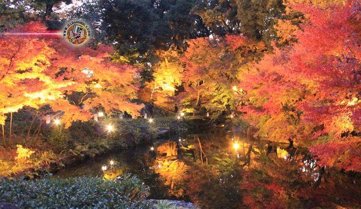 Começa a iluminação de outono no Japão. A iluminação das folhas de outono começou na cidade de Yahiko, Província de Niigata