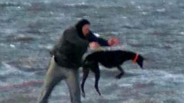 This shocking picture, taken earlier this month, shows a man throwing a live greyhound off the pier at Hartlepool, County Durham, England, into the freezing North Sea. A family witnessed the incident and reported it to police. Sadly, this is typical of what awaits many greyhounds once their racing days are over or their owners' tire of them. Coincidentally, Ireland's government plans to hand over a €16 million subsidy to the country's greyhound industry despite knowing the fate that awaits…