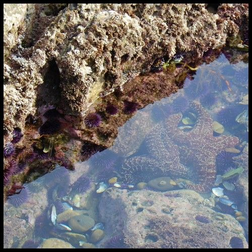 The Best Tide Pools in California for Kids