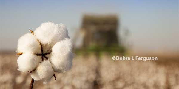 Texas: Cotton, Grain Marketing Focus Of Workshop, Weslaco, Dec. 6-7