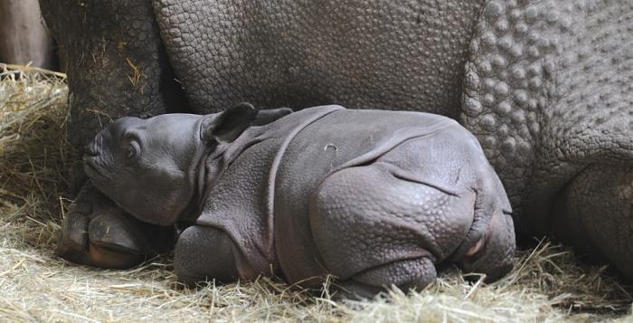 Zoo slaví 5 let s žirafami a nosorožci