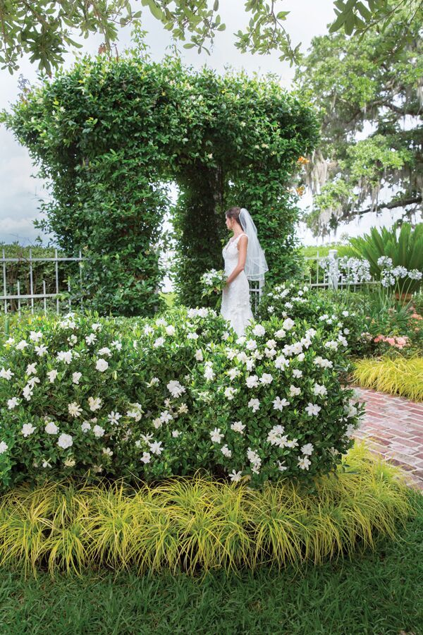 Fall In Love Again And Again With Jubilation™ Gardenia. A Garden Should Be  A Feast For The Senses, As Linda Vater Can Attest.