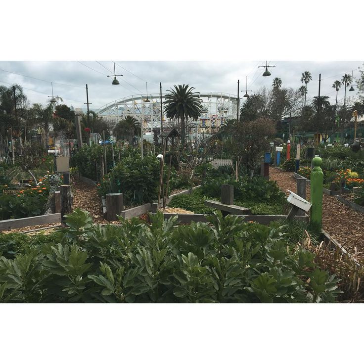 Whole Larder Love / Do you know what I love about the St Kilda community veg garden? EVERYTHING. ❤️❤️❤️❤️❤️
