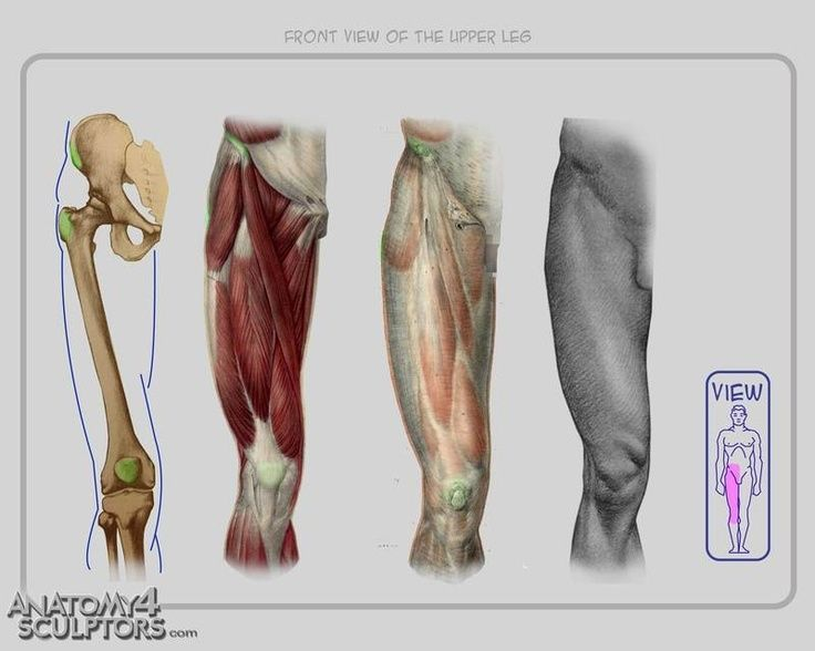 25+ best ideas about human knee on pinterest | anatomy of the knee, Muscles