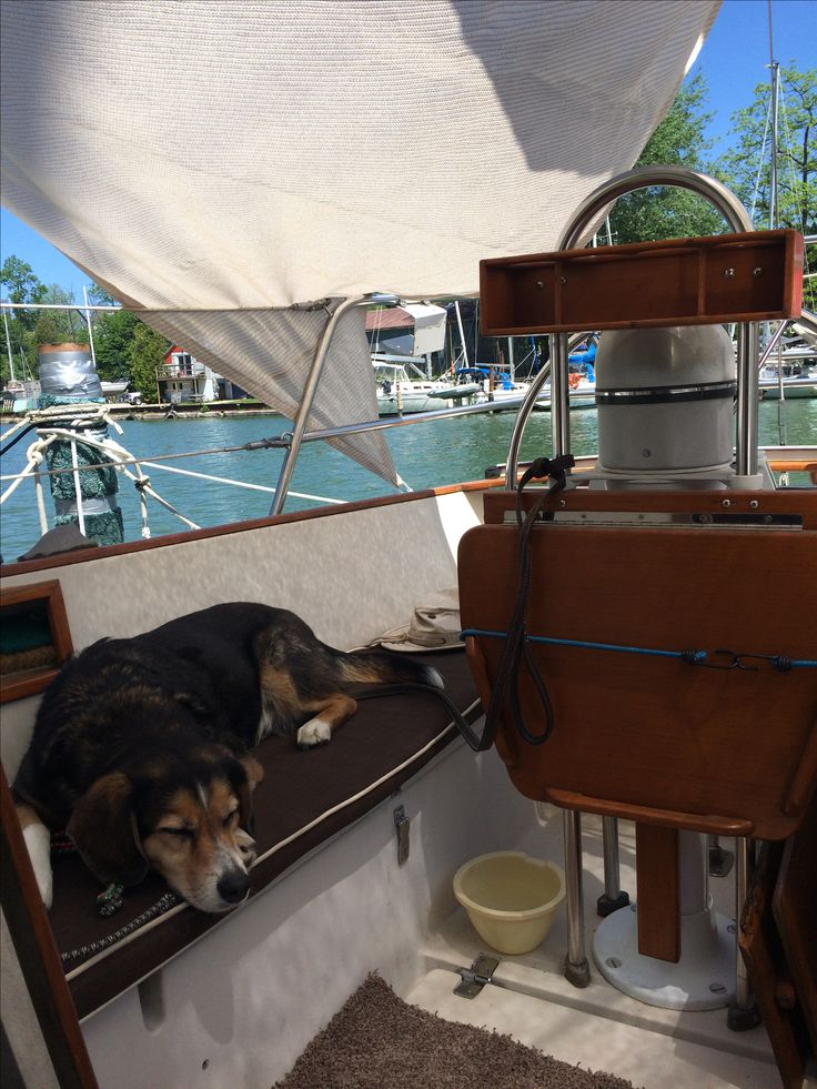 M3 tries life as a boat dog - seems to like it.