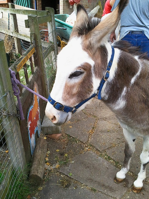 Donkey at Newham City Farm London: http://www.europealacarte.co.uk/blog/2012/09/10/newham-city-farm/