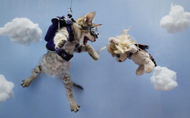 January - Keanu Starring in 'Point Break' - 'Keanu' Cat Calendar Reimagines 12 Beloved Movies with One Adorable Kitten - EW.com