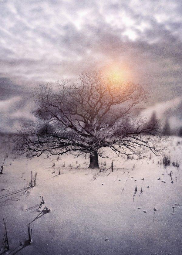 Lone Tree Love II
