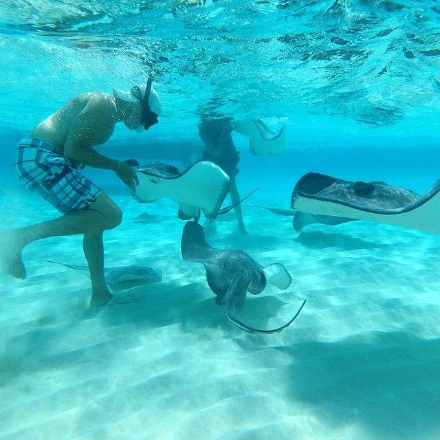 Stingray City, Grand Cayman.