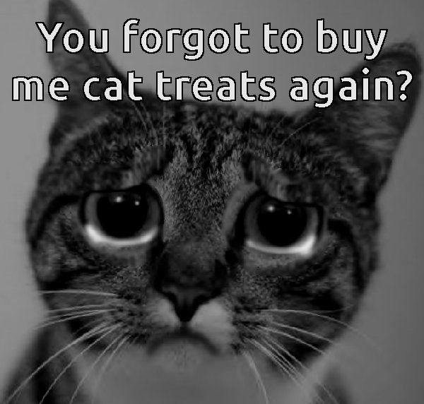 im sorry i forgot your treats . take the fridge and im going to go to the bank and open an account for you .THE KITTY TREAT FUND