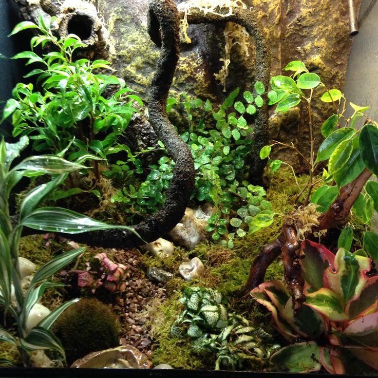 planted terrarium crested gecko