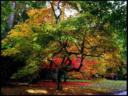 Westonbrit Arboretum, Tetbury, Gloucestershire, UK