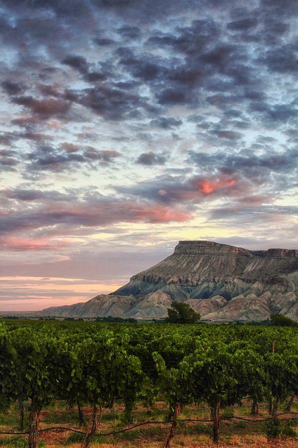 ✯ Vineyards and Mountt Garfield - Colorado