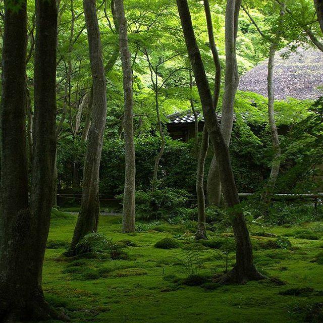 新緑の頃の京都が人が少なくて一番好きかも。 #京都 #祇王寺 #嵐山 #苔 #東京カメラ部 #kyoto #tokyocameraclub #lovers_nippon