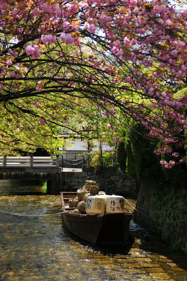 Spring in Takase River, Kyoto, Japan