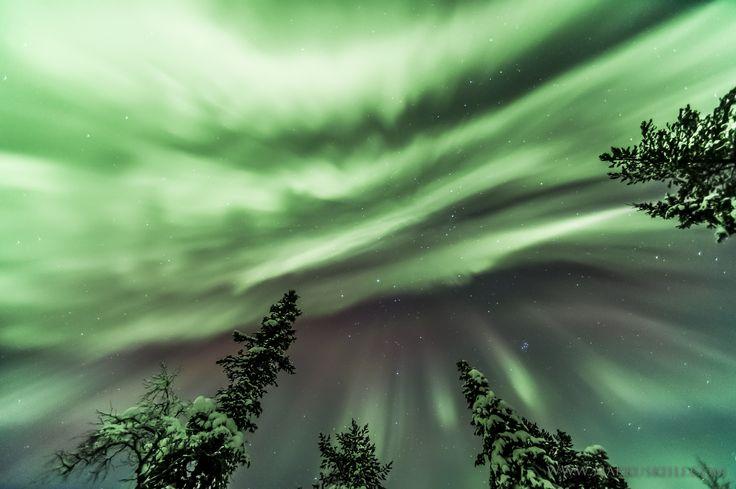 Auroras at Ylläs