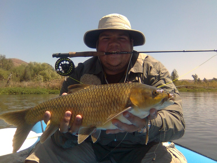 17 best images about yellowfish large smallmouth on for Smallmouth river fishing