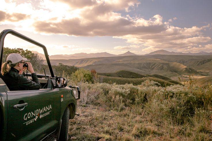 Safari en Afrique du sud - Gondwana game reserve #meetsouthafrica