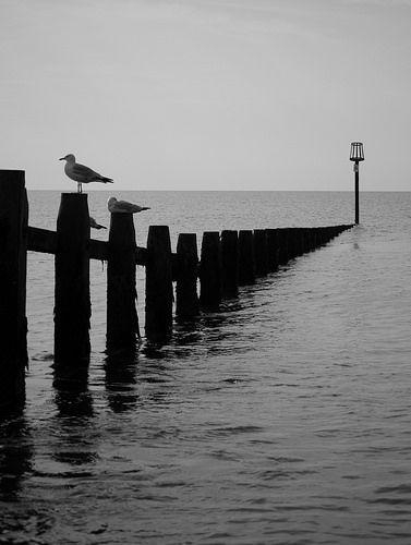 Two Gulls   by Peaf79