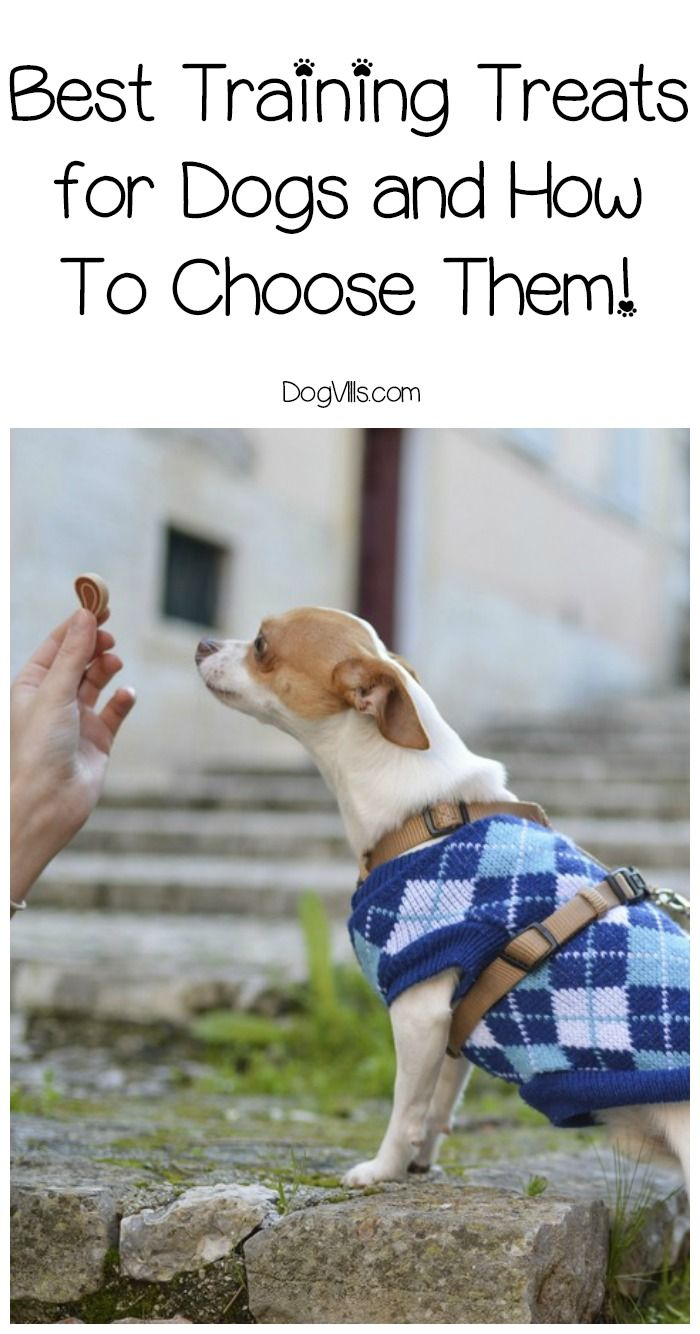 How to Choose Dog Treats