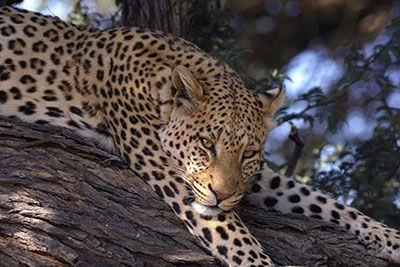 Cape Safari Tour - This is your African safari getaway less than two hours outside of Cape Town. A buffet breakfast is followed by a safari which promises a memorable African bush experience. After your game drive enjoy a buffet lunch before returning to Cape Town.