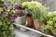 Kräuter auf dem Balkon - was passt gut zusammen, was nicht?
