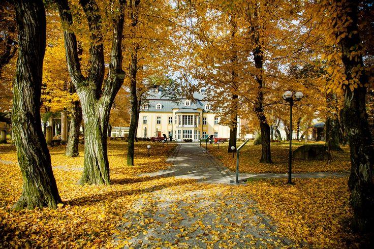 Pałac Kotulińskich - aleja grabowa