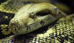 Morsures de serpent : le fléau dont on ne parle pas | PassionSanté.be