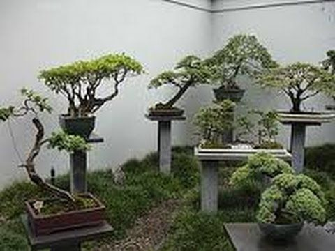BEAUTIFUL    BONSAI   IN   THE    MIDDLE     OF    NATURE
