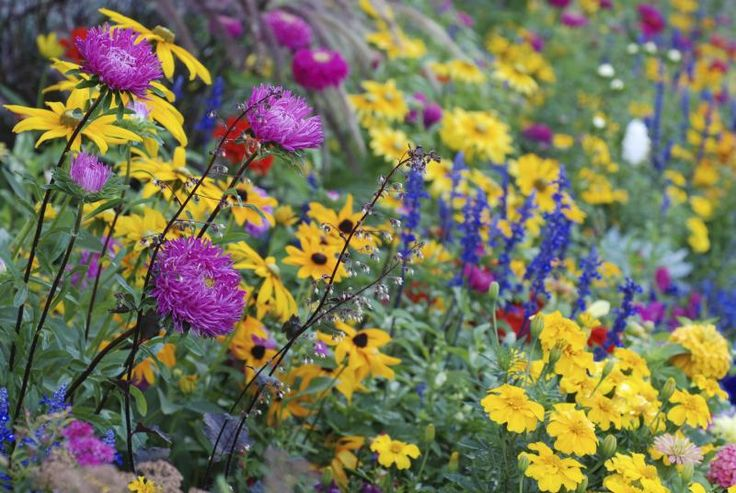 Perennials That Bloom All Spring And Summer Summer