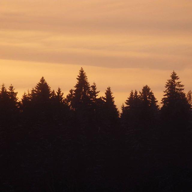 #nature #tree #sky #vanilla #sunset #природа #закат