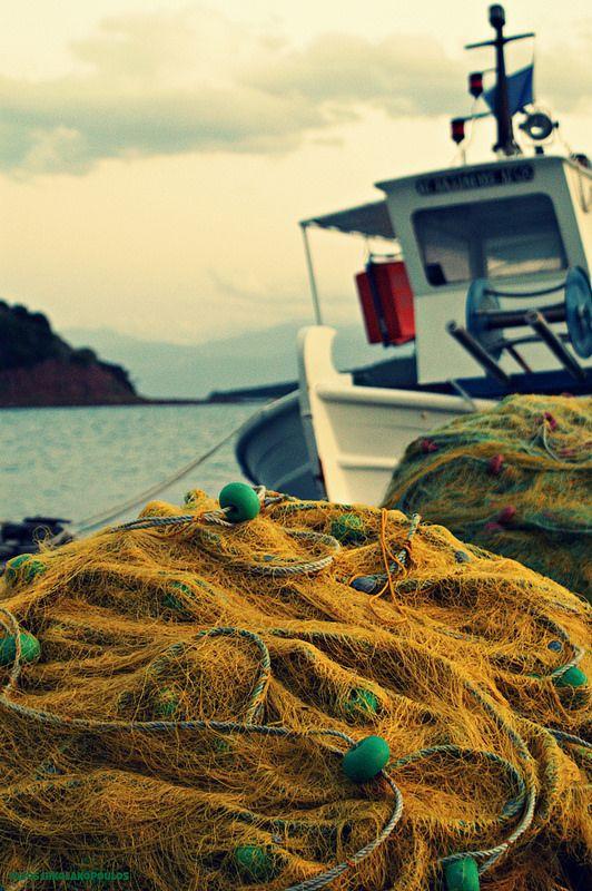 Yellow fish.