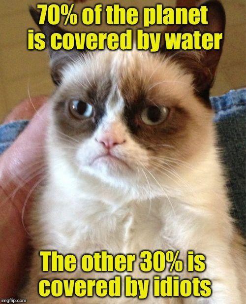 27 Grumpy Cat Funny Memes #Grumpy cat #Grumpy cat memes: