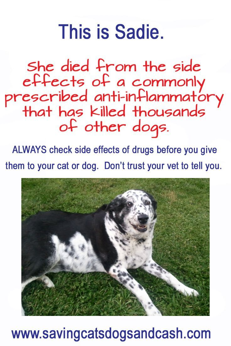 Be An Informed Pet Owner I Regret Not Being One And That S Why I Started My Blog To Save Others From My Fatal Mist Dogs Saving Cat Agility Training For Dogs