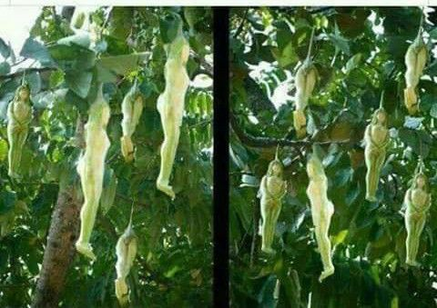 This strange flower named narilata female plant blooms for Sri lankan landscaping plants