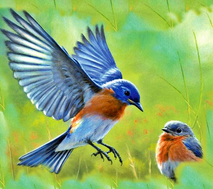 Mama and baby bluebird tattoo birds painting bird