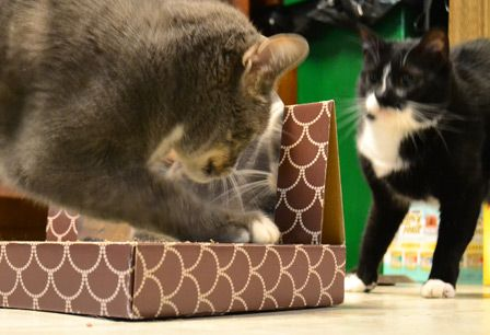 Scratching is an instinctive part of your cat's life; satisfy that need to scratch (and save your sofa!) with a cat scratcher. Linus loves this one that we found at #TuesdayMorning for just $14.99, compared to $29.99 at other stores.