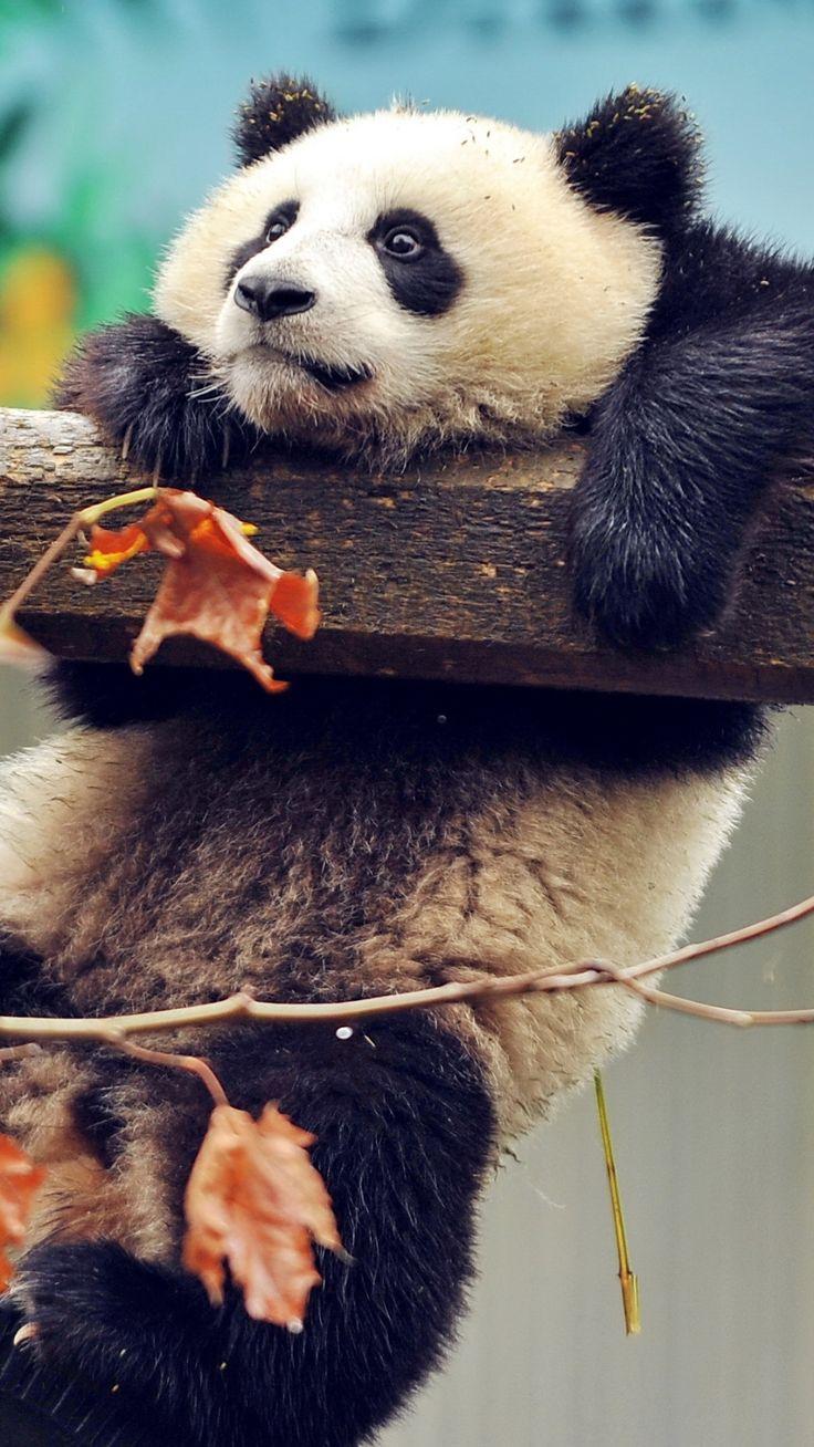A wy ile razy w życiu czuliście się jak ta panda?