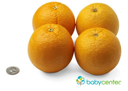 31 weeks: Your baby now weighs as much as four navel oranges. (Length: over 16 inches, head to heel.) #howbigidyourbaby #pregnancy @babycenter